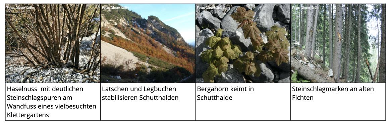 Abb. 7 Beispiele für Vegetation als Steinschlagmarker