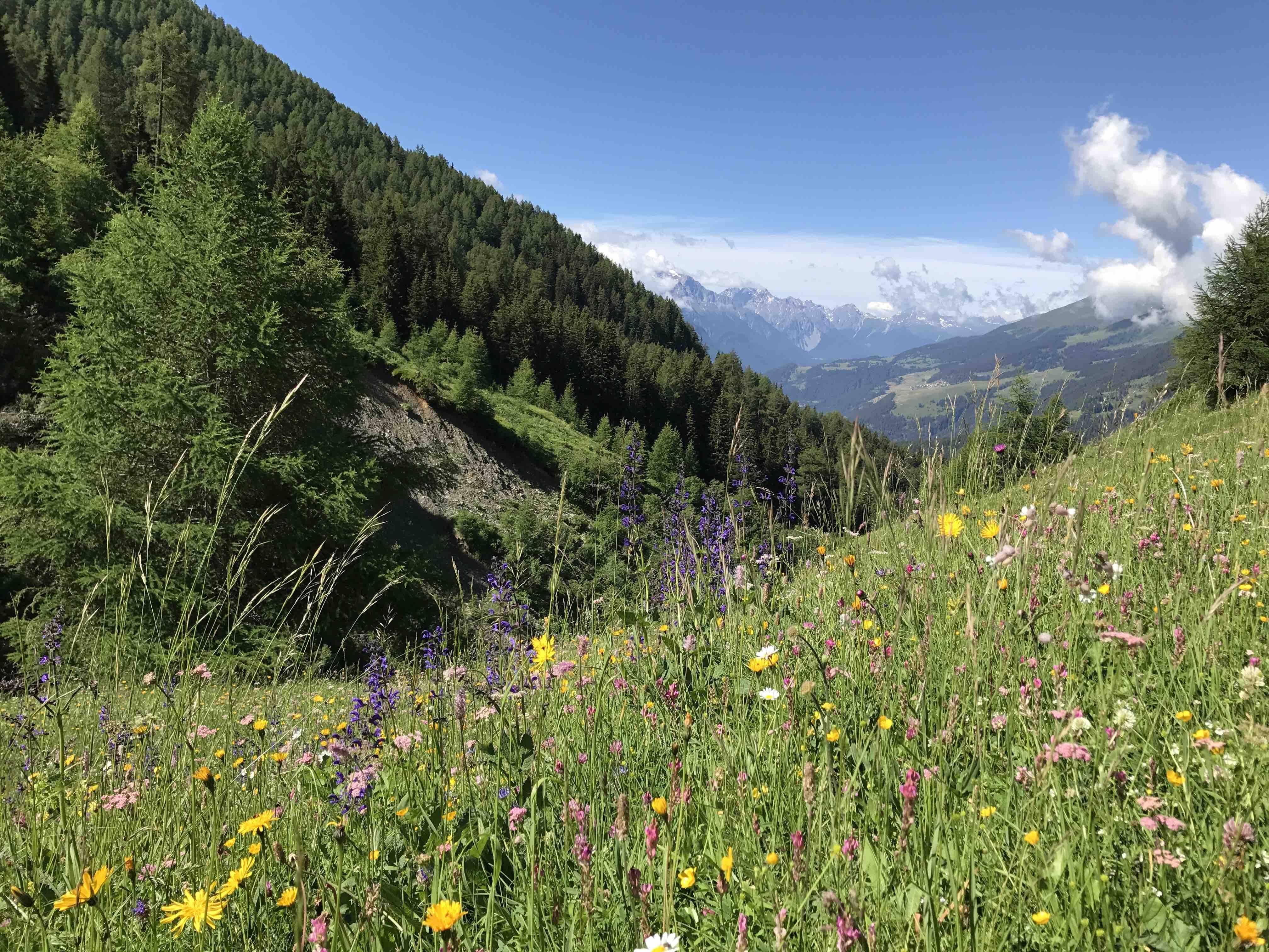 Artenreiche Ökosysteme können sich besser an geänderte Umweltbedingungen anpassen. Foto: Christina Schwann