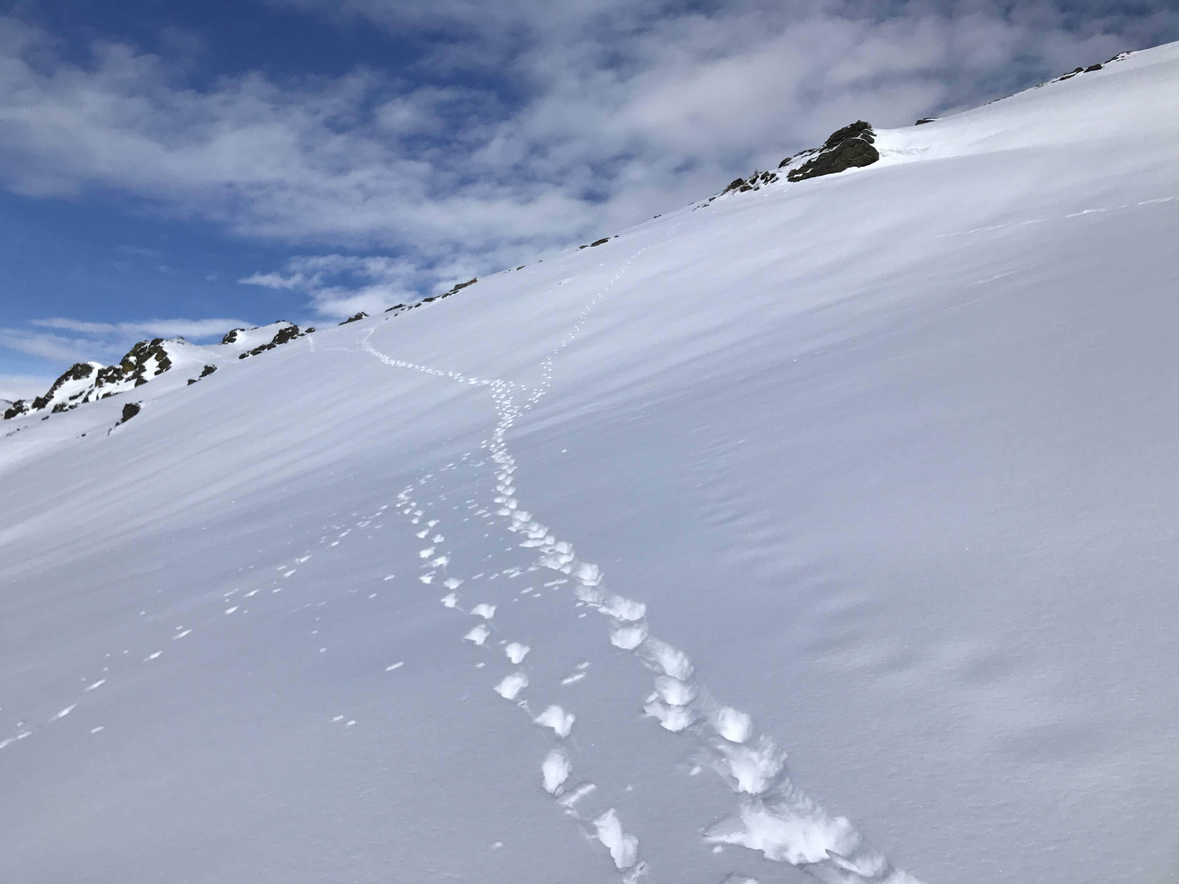 Kurzfristig war es durch die Ausgangsbeschränkungen ruhig am Berg. Unbehelligt zog ein Rudel Gämsen ihre Spuren in den Schnee. Foto: Christina Schwann