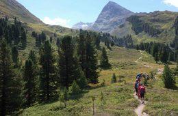 Unterwegs am Zirbensteig in Obergurgl/Ötztal. Foto: LO.LA, Wanderstudie 2020 I bergundsteigen.blog