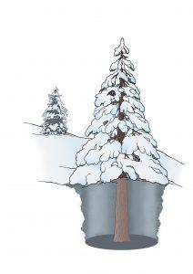 Ein Tree Well, übersetzt ein Baumtrichter oder Baumloch